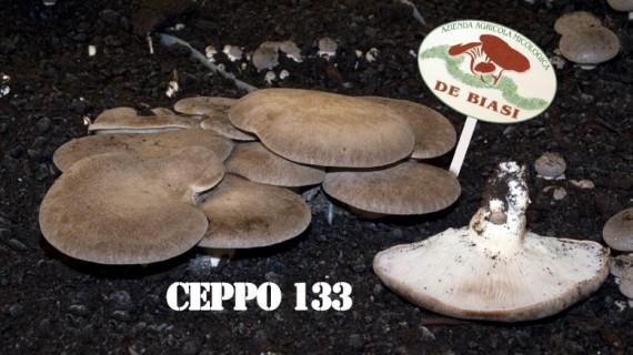Cardoncello Ceppo 133