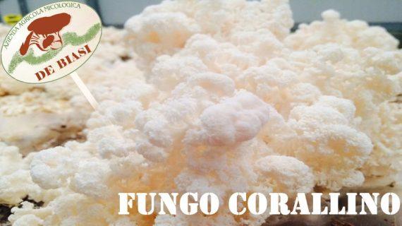 Fungo Corallino